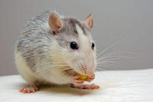 Entender a tu rata
