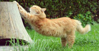 gato flexible