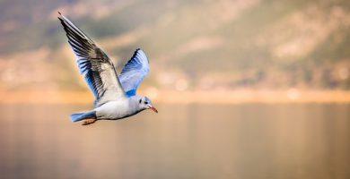 aves voladoras