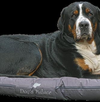 camas de perros