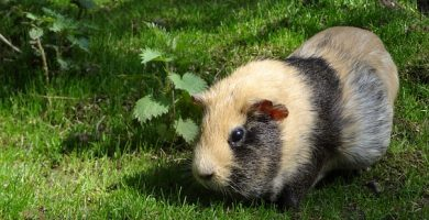 hamster enfermedad