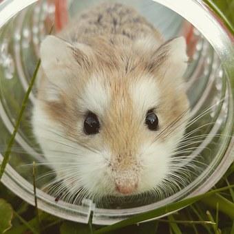 hamsterjuego