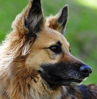 pelo de perro