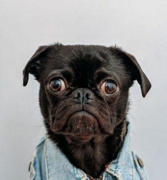 nombre de perros