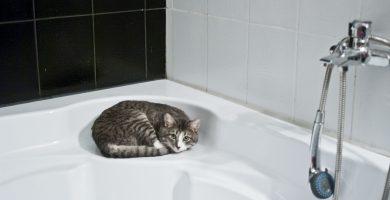 baño de gatos